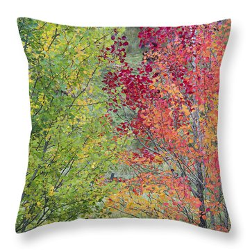 Autumnal Aspen Trees Throw Pillow
