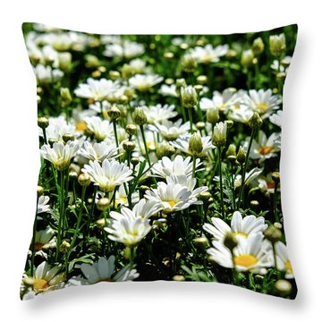 Throw Pillow featuring the photograph Avalanche Sun Daises by Monte Stevens