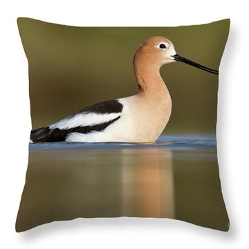 Avocet Cooling Off Throw Pillow