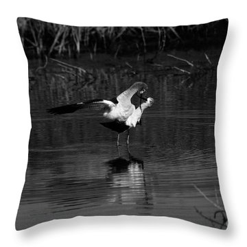 Throw Pillow featuring the photograph Avocet Courtship Dance by John F Tsumas