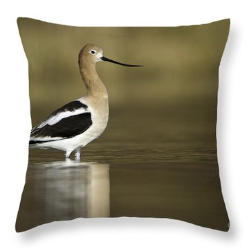 Avocet Looking Pretty Throw Pillow