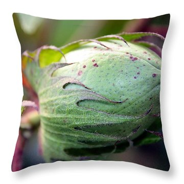 Awaiting Glory Throw Pillow
