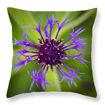 Awakening Throw Pillow by Patrick Downey