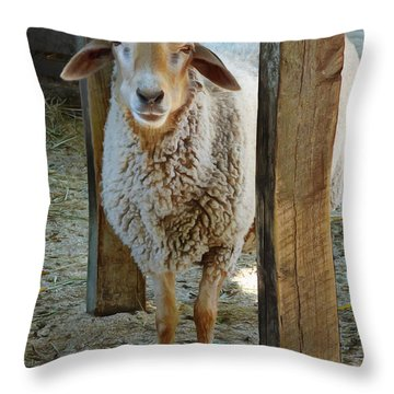 Awassi Sheep Throw Pillow by Steve Taylor