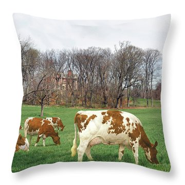 Ayrshire Cows 3rd Throw Pillow