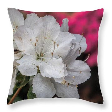 Throw Pillow featuring the photograph Azaleas In Turtle Creek by Diana Mary Sharpton