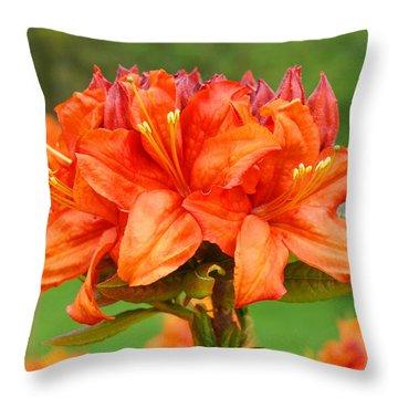 Azaleas Orange Red Azalea Flowers 11 Botanical Giclee Art Baslee Troutman Throw Pillow by Baslee Troutman