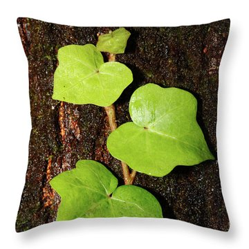 Azores Endemic Hedera Throw Pillow by Gaspar Avila