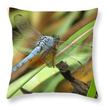 Throw Pillow featuring the photograph Azure Dragonfly 1 by David Dunham