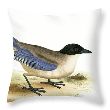 Azure Winged Magpie Throw Pillow by English School