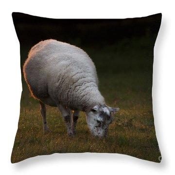 Baa Baa Throw Pillow