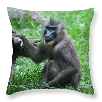 Throw Pillow featuring the photograph Baboon by Monte Stevens