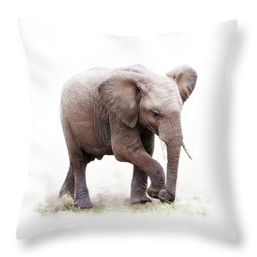 Baby African Elephant Isolated On White Throw Pillow
