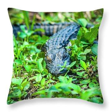 Baby Alligator Throw Pillow