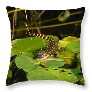 Baby Alligator Throw Pillow by David Lee Thompson