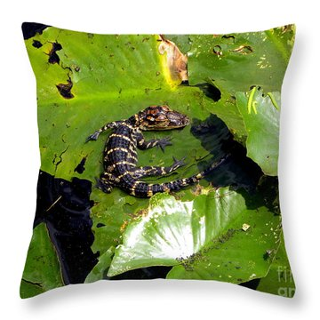 Throw Pillow featuring the photograph Baby Alligator by Terri Mills