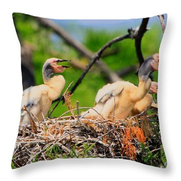 Throw Pillow featuring the photograph Baby Anhinga Chicks by Barbara Bowen