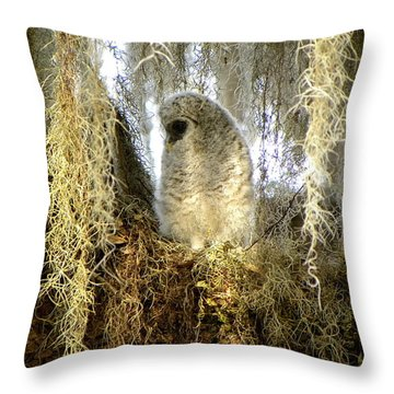 Baby Barred Owl 000 Throw Pillow