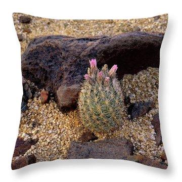 Baby Barrel Cactus Throw Pillow