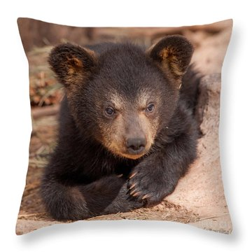 Baby Bear Portrait Throw Pillow by Laurinda Bowling