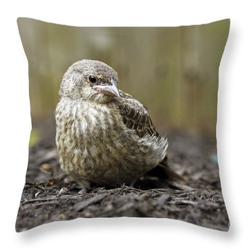 Baby Bird Throw Pillow by Denise Pohl