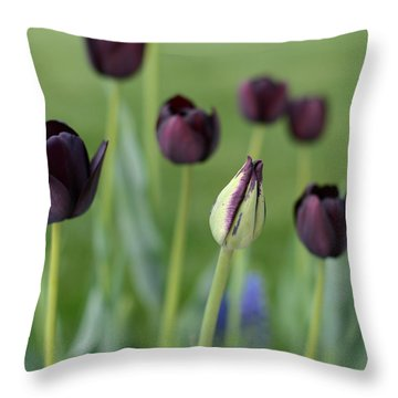 Throw Pillow featuring the photograph Baby Bloomer by Linda Mishler