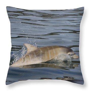 Baby Bottlenose Dolphin - Scotland  #35 Throw Pillow