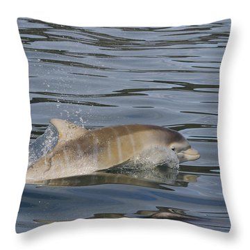 Baby Bottlenose Dolphin - Scotland  #35 Throw Pillow