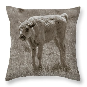 Throw Pillow featuring the photograph Baby Buffalo by Rebecca Margraf