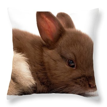 Baby Bunny  #03074 Throw Pillow