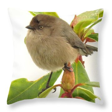 Baby Bushtit Throw Pillow