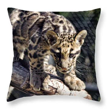 Baby Clouded Leopard Throw Pillow