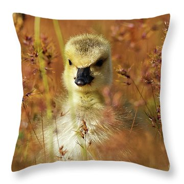 Baby Cuteness - Young Canada Goose Throw Pillow