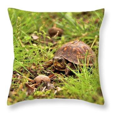 Baby Eastern Box Turtle Throw Pillow