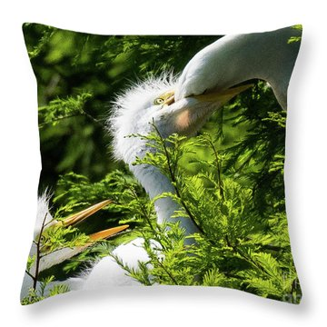 Baby Egrets Being Feed Throw Pillow