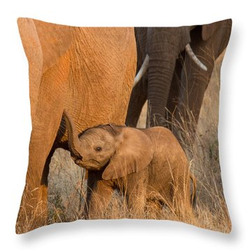 Baby Elephant 2 Throw Pillow