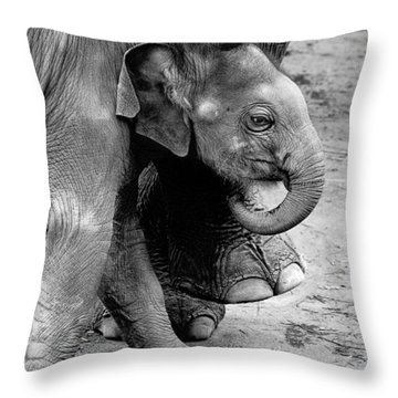 Baby Elephant Security Throw Pillow