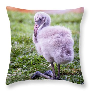 Baby Flamingo Sitting Throw Pillow by Stephanie Hayes