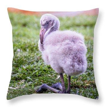Baby Flamingo Sitting Throw Pillow