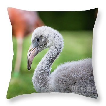 Baby Flamingo With Mom In Background Throw Pillow by Stephanie Hayes