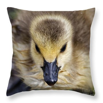 Baby Goose Portrait Throw Pillow