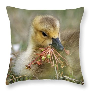 Baby Gosling Collecting Flowers Throw Pillow