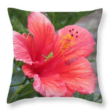 Throw Pillow featuring the photograph Baby Grasshopper On Hibiscus Flower by Nancy Nale