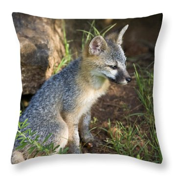 Baby Gray Fox Resting On Bluff Side Throw Pillow