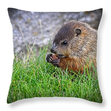 Baby Groundhog Eating Throw Pillow