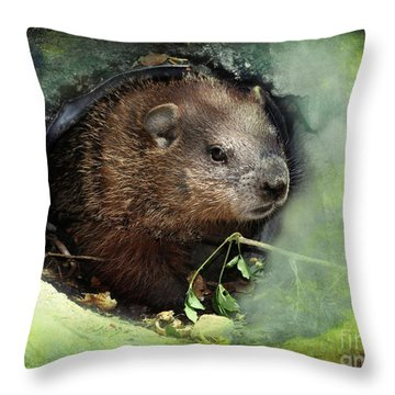 Throw Pillow featuring the photograph Baby Groundhog by Elaine Manley