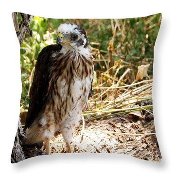 Baby Hawk Fell Out Of Nest Throw Pillow