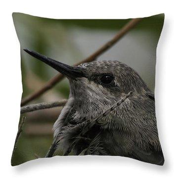 Baby Humming Bird Throw Pillow