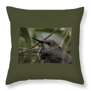 Baby Humming Bird Throw Pillow