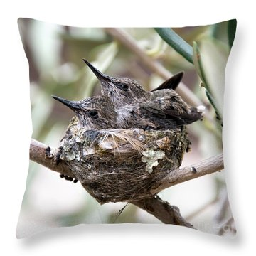Baby Hummingbirds Outgrowing Their Nest Throw Pillow